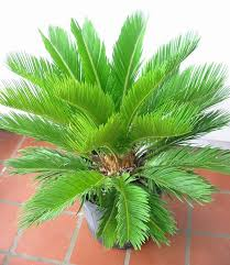 Indoor Plants Low Light Hgtv by Indoor House Plants With Names And Pictures Picture Of A Potted