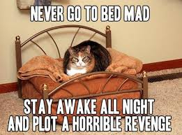 Stay In Bed Meme - never go to bed mad cat humor