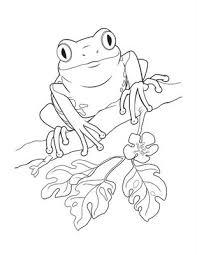 tree frog clipart coqui pencil color tree frog clipart coqui