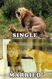 Animal Meme - single vs married adult animal meme