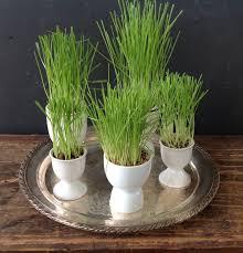 egg cups wheat grass u003d easy spring decor u2013 home spun style