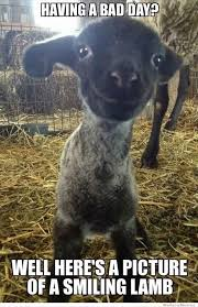 Be Happy Memes - elegant smiling l quotes memes quote happy meme animals cute lamb