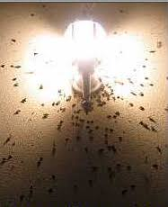 how to keep bugs away from porch keeping bugs away from the front door how does your garden grow