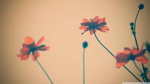 Cute Flower Wallpapers - cute flower wallpapers hd