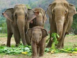 baby elephant photo save elephant foundation
