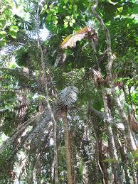 native rainforest plants october 29 daintree rainforest
