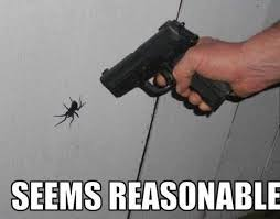 Funny Spiders Memes Of 2017 - video when a spider lands on you 5 other silly spider memes