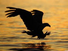 strange eagle wallpapers gepind vanaf kepguru hu birds from kepguru hu pinterest