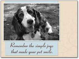 themed sympathy cards smartpractice veterinary