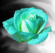 teal roses teal roses teal by ladyvixen911