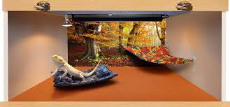 carolina designer dragons hammock for bearded dragons autumn