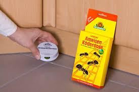 ameisen auf dem balkon ameisen bekämpfen die nützlichen schädlinge gartenträume