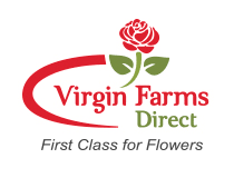 flowers direct direct to retail fresh cut flowers farms direct