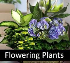 Plant Delivery Banner University Medical Center Hospital Flower Delivery