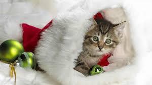 merry christmas cat gif ne wall