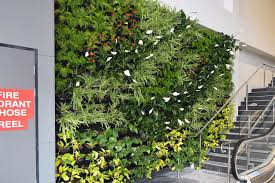 Wall Gardens Sydney by Mackay Library Foyer Gets Green Wall Atlantis Aurora