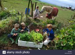 family gardening young children family growing vegetables on their patch in the