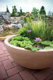 Container Water Garden Ideas Container Water Gardening Ideas For Small Spaces