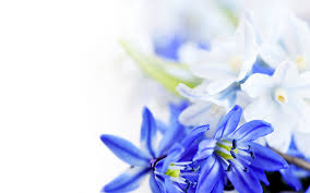 Blue And White Wallpaper by White Blue Angel 7041446