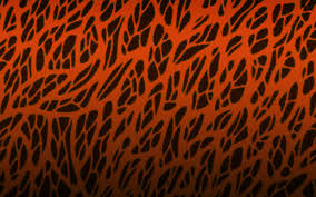 desktop brown zebra print wallpaper dowload