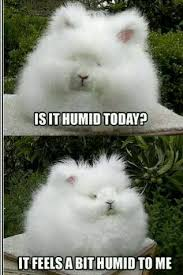 Bunny Meme - humidity bunny meme by pastelcracks memedroid