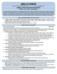 re entry professional resume