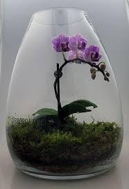 glass plant terrarium ideas terraria plants and glass