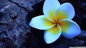 blue flowers blue flowers