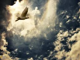 flying through heaven dove clouds flying heaven sky