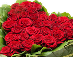 Picture Of Roses Flowers - 28 flowers of roses pictures flowers images rose hd