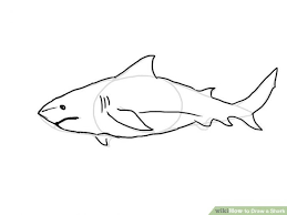 coloring decorative easy shark drawings white clipart