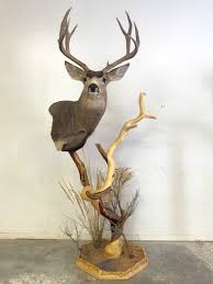 Deer Pedestal Taxidermy Intermountain Taxidermy And Worldwide Adventures
