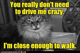Crazy Cat Meme - lolcats crazy lol at funny cat memes funny cat pictures with