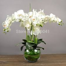Fake Orchids Orchids Leaves Online Artificial Orchids Leaves For Sale