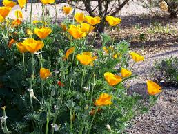 are you ready to plant wildflower seeds a garden or a winter lawn