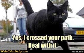 Meme Generator Deal With It - black cat crossing meme generator captionator caption generator