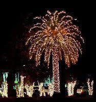 palm trees lights rainforest islands ferry