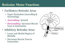 Part Of Brain That Controls Arousal Higher Brain Functions Physiology