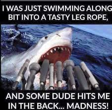 Shark Attack Meme - shark comments on the incident mick fanning shark attack know