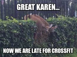 Oh Deer Meme - mandatory meme contest winners oh deer mandatory