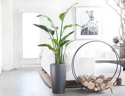 Best Plants For Bedroom Custom 20 Best Indoor Office Plants Inspiration Of 9 Low