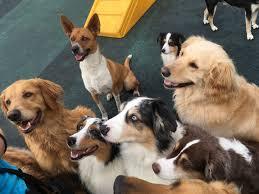 orange county dog training daycare u0026 boarding wags u0026 wiggles