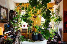 plants that don t need light best plants for bedroom oxygen that induce sleep zz plant give