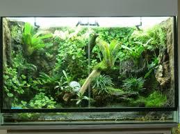 great rain forest vivarium setup vivarium u0026 terrarium pinterest