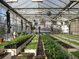 backyard greenhouse designs ideas for greenhouse design you u0027ll