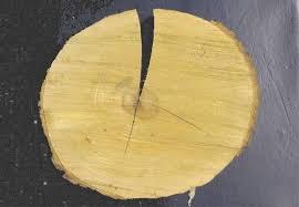 measuring seasonal wood shrinkage