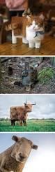 best 25 photos of animals ideas on pinterest animals photos