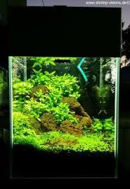 Aquascaping Plants Pin By Kelley Brewer On Fish Pinterest Aquariums Betta Fish