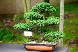 small japanese tree japanese small tree my style small