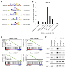 the emt regulator zeb2 is a novel dependency of human and murine